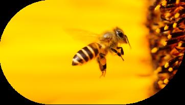 Bienen helfen!